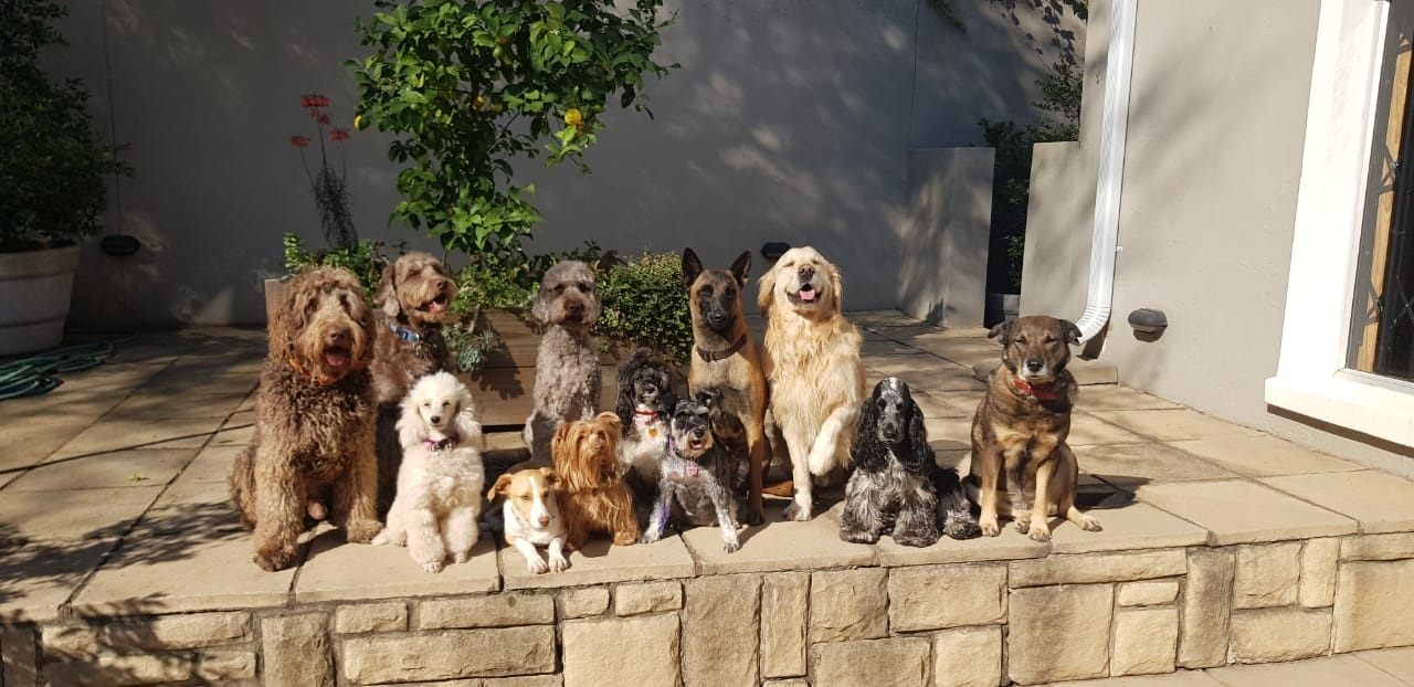 Your Dog and Me - Pet Sitting/House Sitting