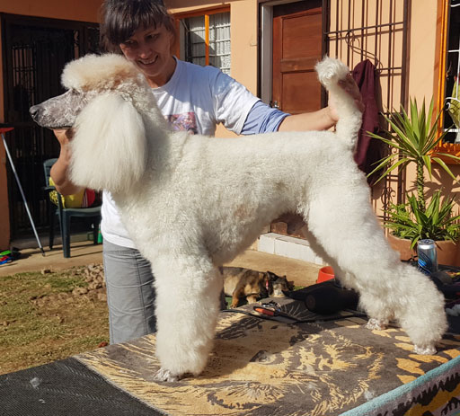 Your Dog and Me  - Dog Grooming